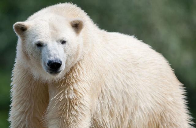 ps动物毛发抠图教程 几步便可抠取动物毛发