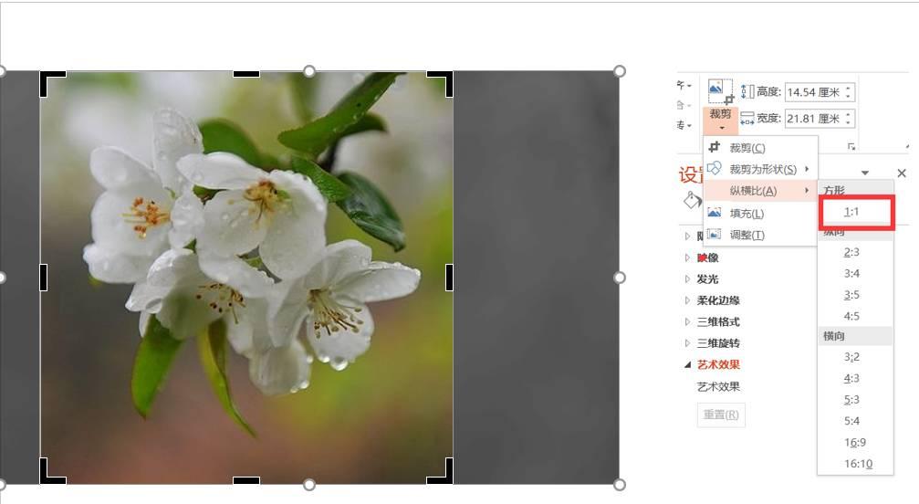 第二步:将图片裁剪为正圆形(只有在图片为正方形时选择裁剪为圆形