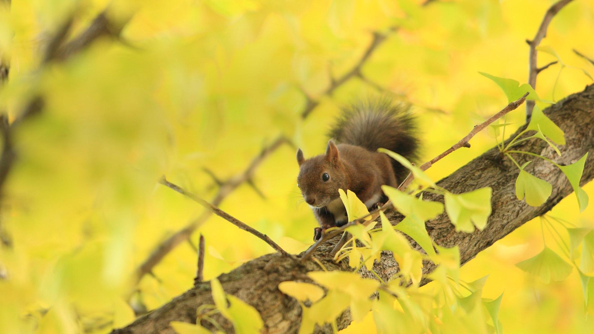 树上的松鼠图片素材