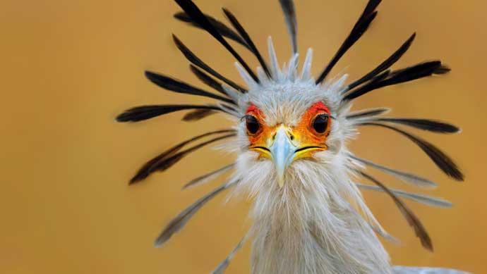 这是一套南非蛇鹫ppt图片素材免费下载,喜欢的人都来管理资源吧下载吧
