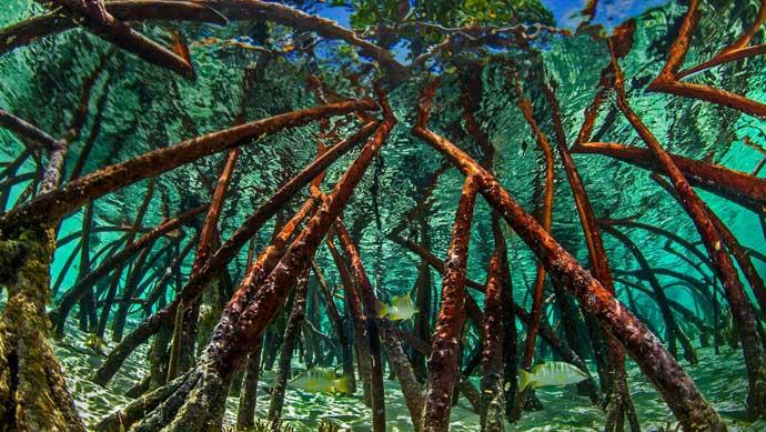 海底红树林ppt图片素材免费下载