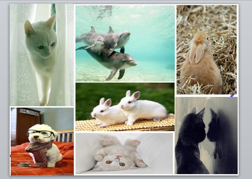 ppt模板 教育ppt模板 可爱的动物ppt美术课件免费下载  类别:教育ppt