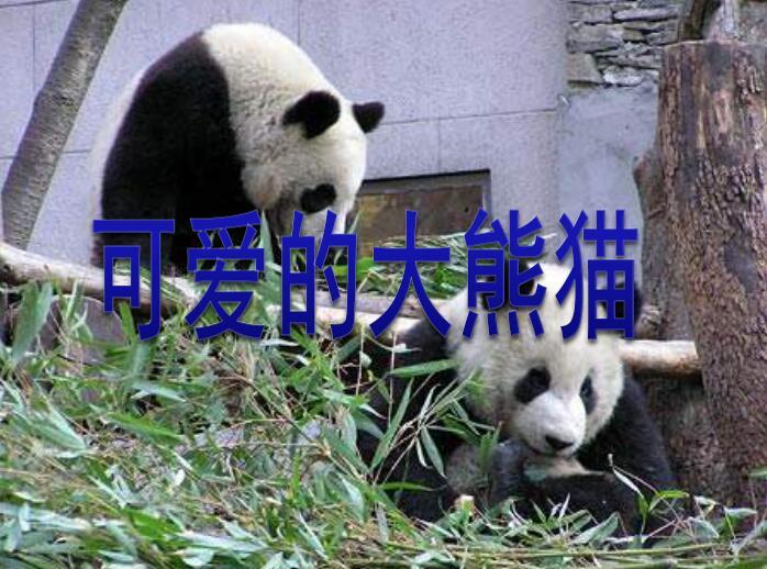 可爱的大熊猫ppt-西师版小学三年级上册语文课件,此款模板制作精美