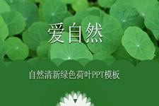 自然清新绿色荷叶PPT模板