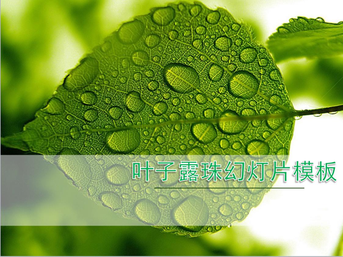 清新绿色叶子水滴背景ppt模板