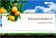 植物水果主题桔子背景PPT模板