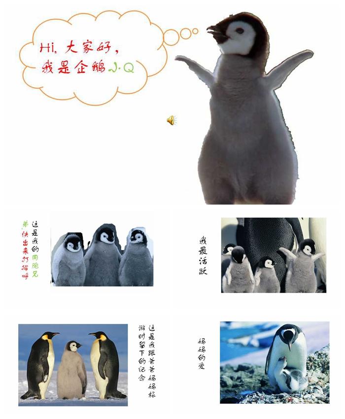 企鹅的心声 保护动物PPT模板