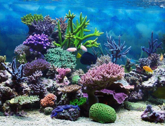 唯美海底世界图片