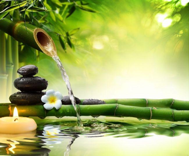 竹林美景图片