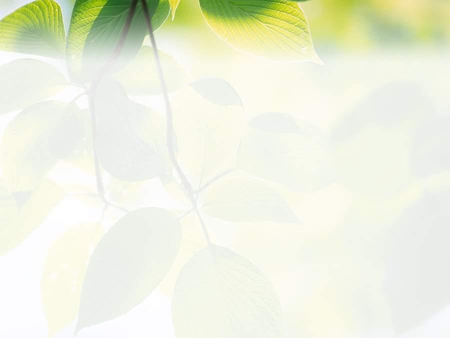 素雅绿色藤蔓PPT背景图片素材