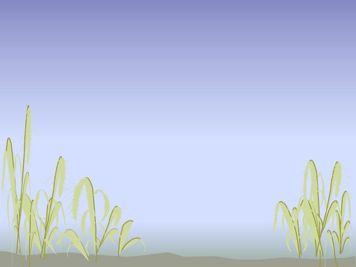 水草植物ppt模板