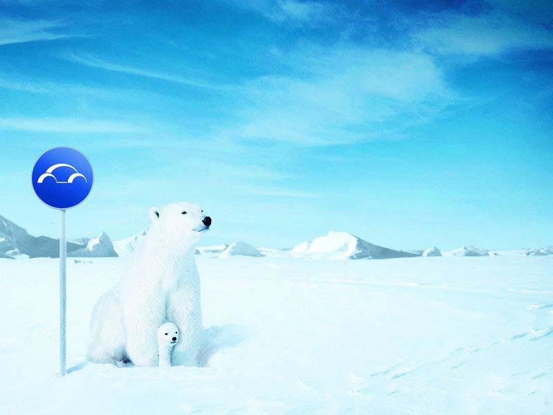 北极熊ppt课件背景图片