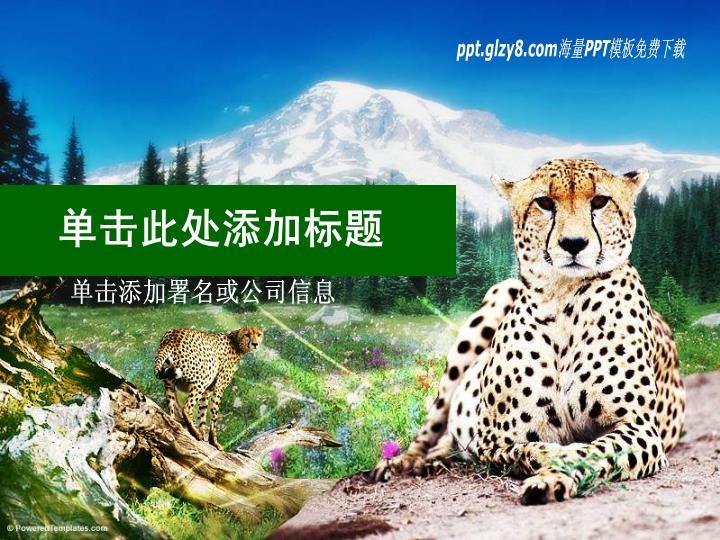 美洲豹保护动物类PPT模板