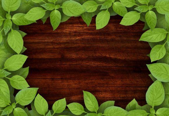 木板ppt背景绿叶边框图片