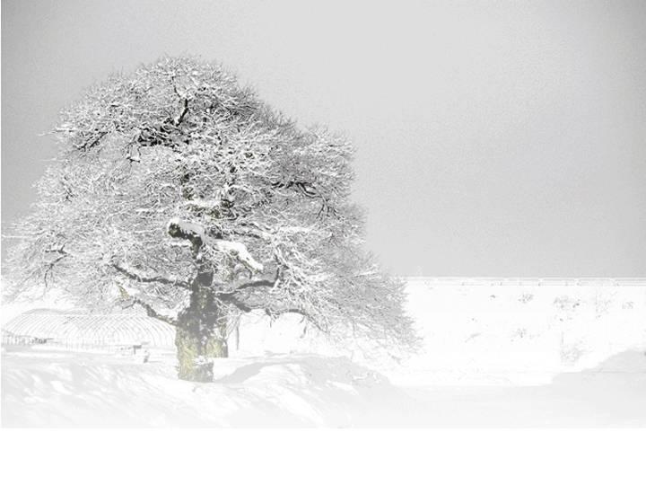 下雪了风景PPT模板 管理资源吧