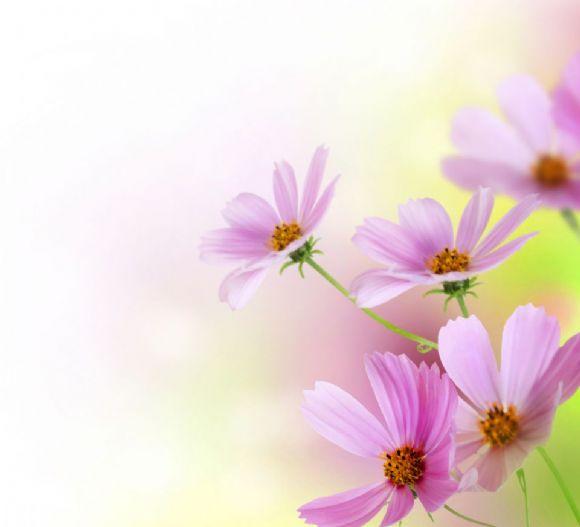 唯美花朵意境ppt背景图片