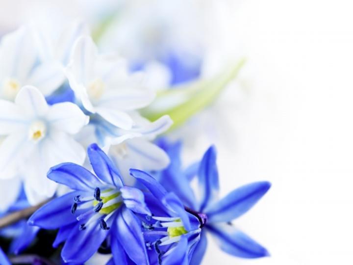 清新花朵背景ppt模板