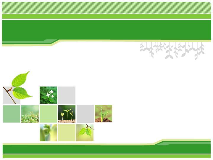植物成长ppt图表模板
