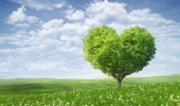 爱心树木ppt背景图片