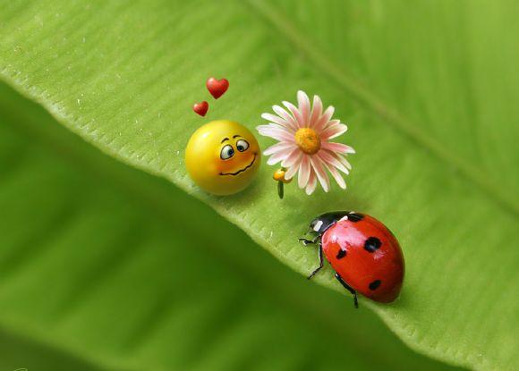 调皮可爱小人示爱七星瓢虫绿叶ppt背景图片
