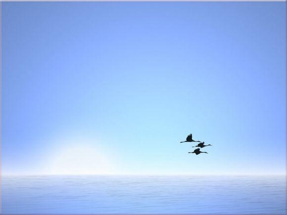 大海蓝色背景淡雅大鸟PPT封面背景图片