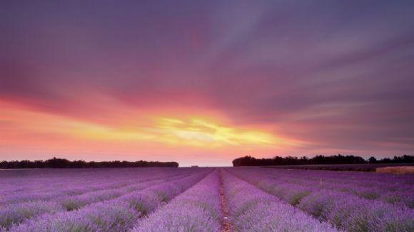 夕阳下的薰衣草幻灯片背景图片