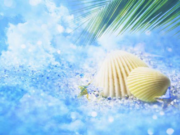 漂亮的贝壳蓝色ppt背景图片